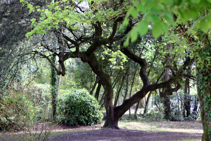 Pélerinage 2 : Parc de la Chêneraie
