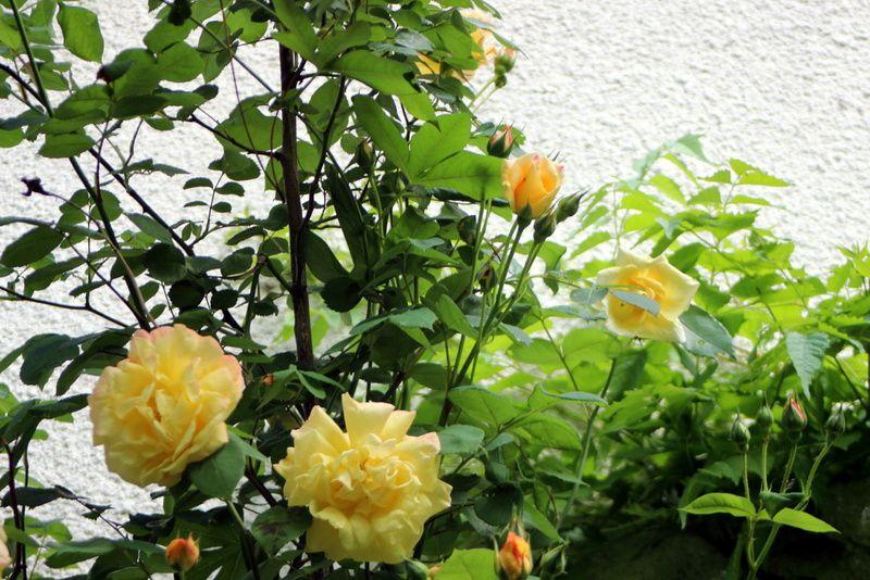 J 39 ai descendu dans mon jardin le blog de divagations et balades - Je campe dans mon jardin ...