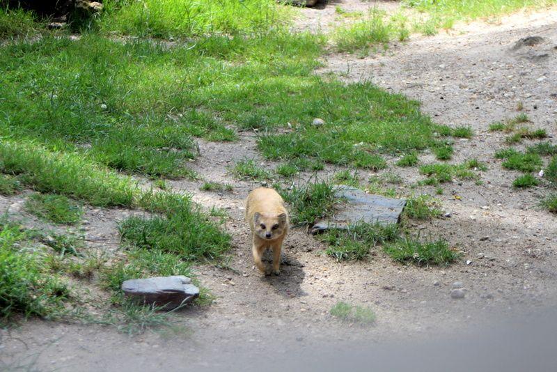 Au Paradis des animaux : Chapitre III : Rikki Tikki Tavi