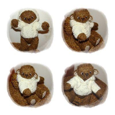 Petit ours brun...
