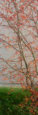Deux FABLES  de Jean-Claude Renard : Ne croyez pas l'arbre de bois (...) Le fleuve est dans la pierre (...)