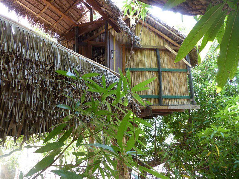 Jungle park, c'est cet incroyable espace dédié aux sports d'aventure par Mathieu et son asso Newsearoc http://www.newsearoc.com/ : escalade, spéléo, accrobranche, trek, kitesurf, VTT, randos dans une nature vierge où vivent les espèces endémiques végétales (susceptibles de remplacer un très grand nombre de médicaments chimiques) et animales les plus improbables (lémuriens, perroquets) etc &#x3B; on dort dans les arbres, au rythme dicté par les phénomènes naturels &#x3B; du point de vue au-dessus du village, par-dessus Ivovona caché dans un creux, on aperçoit l'océan indien à 6 kms à vol d'oiseau et toujours les baobabs poussent dans des positions acrobatiques