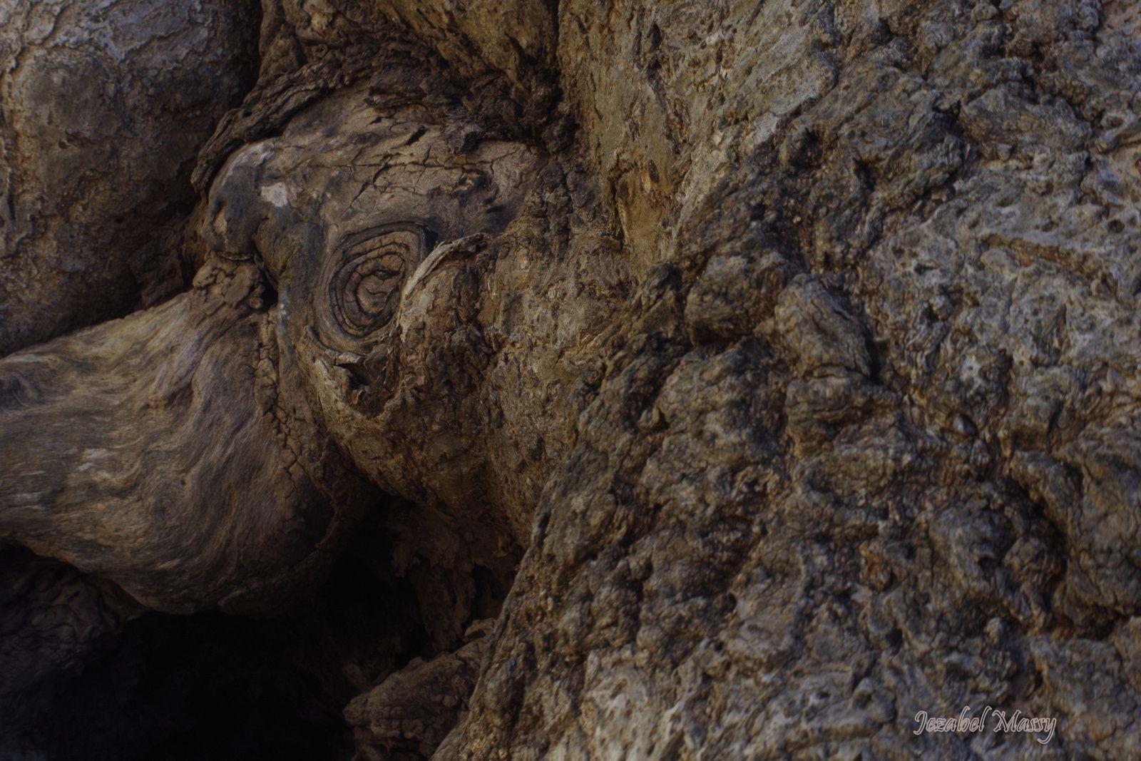 L'oeil de la seiche  sur la tête est cerné ! La moitié de la partie avant (ses tentacules) est dissimulée dans l'océan (coupé par l'ar bre)
