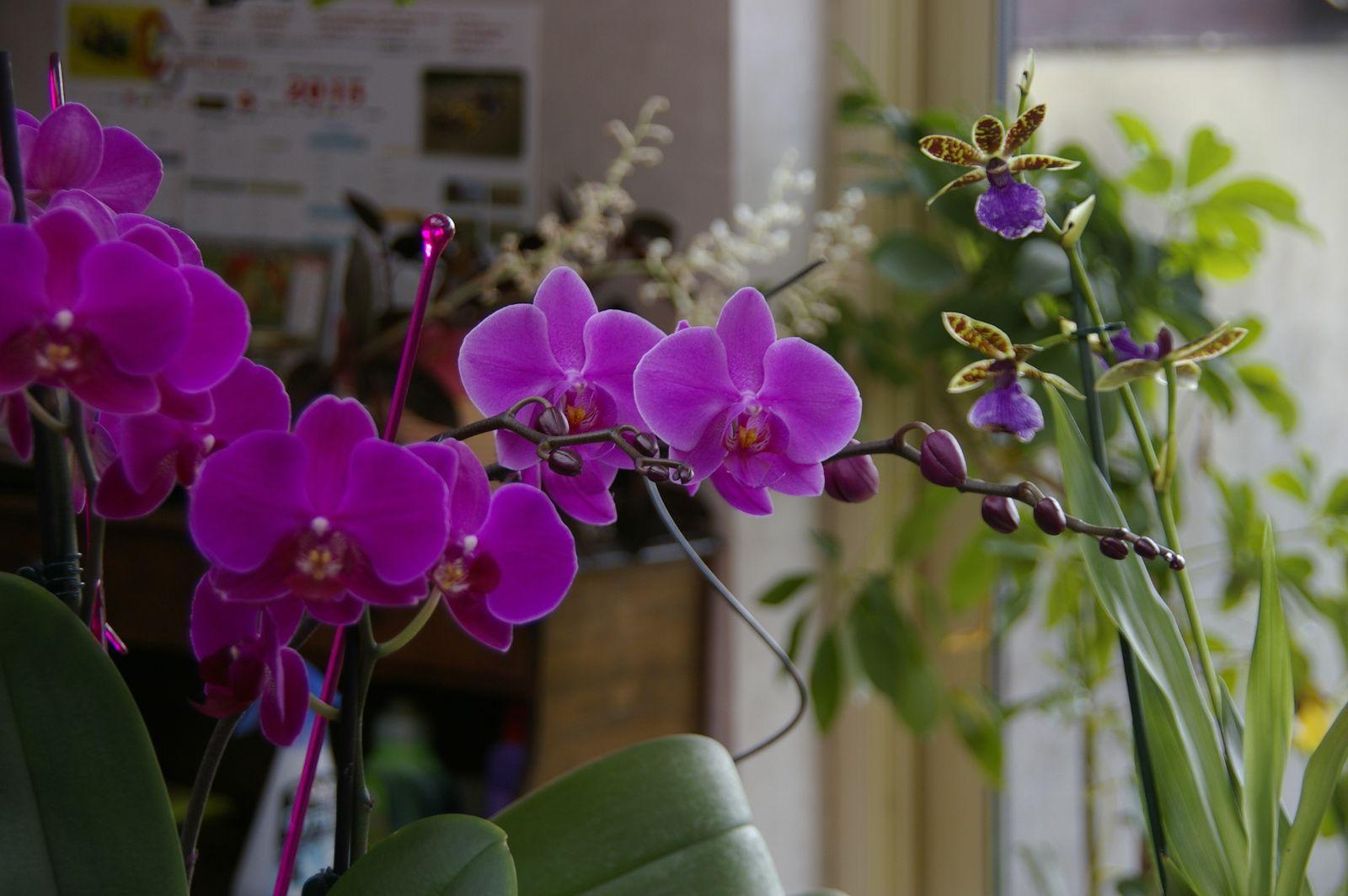 Et du rose et du violet avec les orchidées.