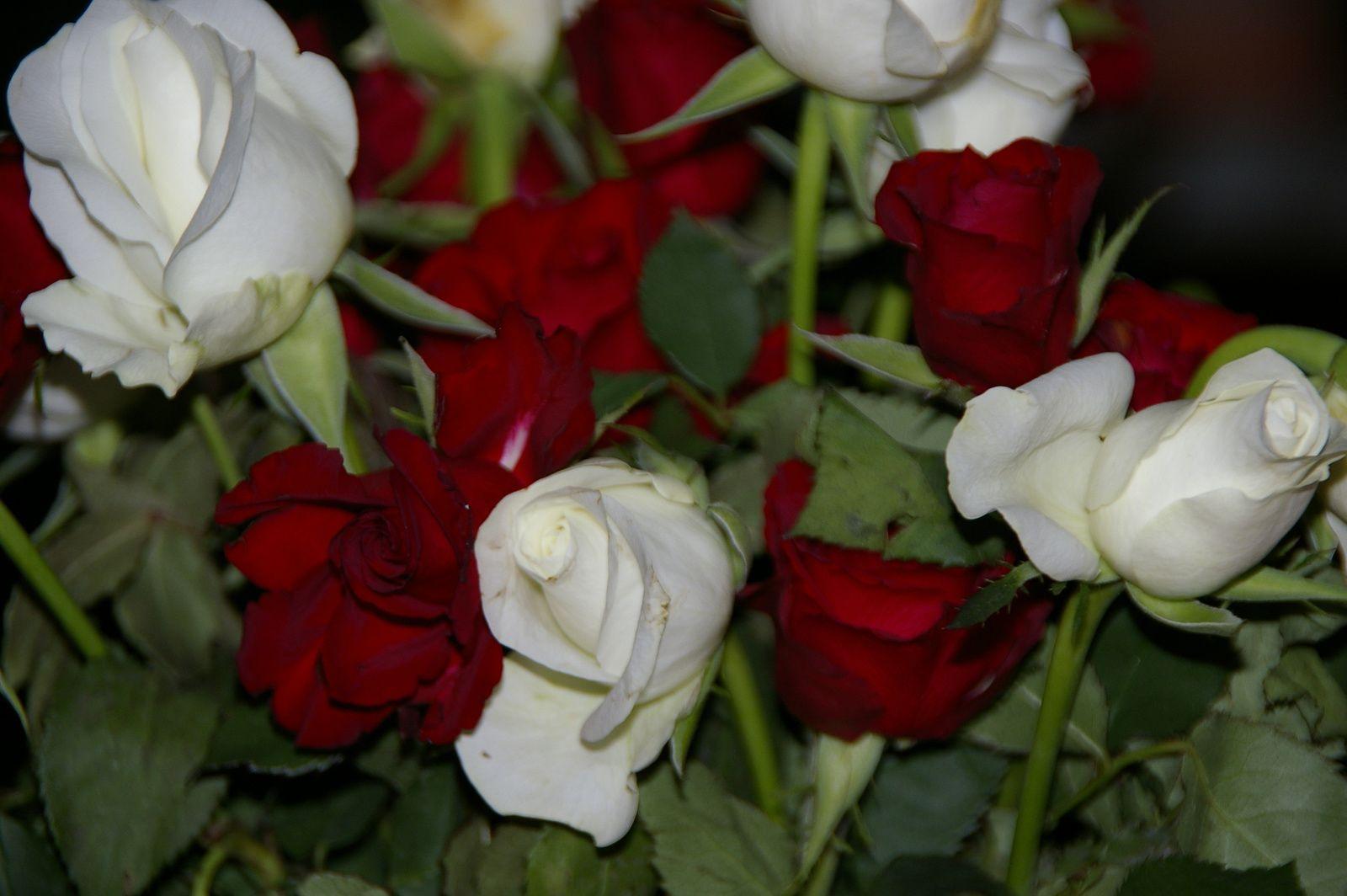 Des roses offertes par mon fils aîné.