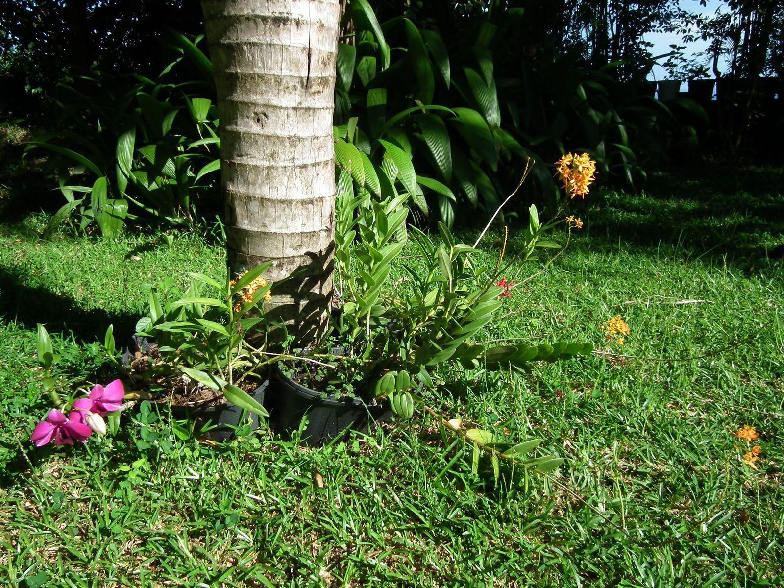 les belles orchidées intérieur/extérieur