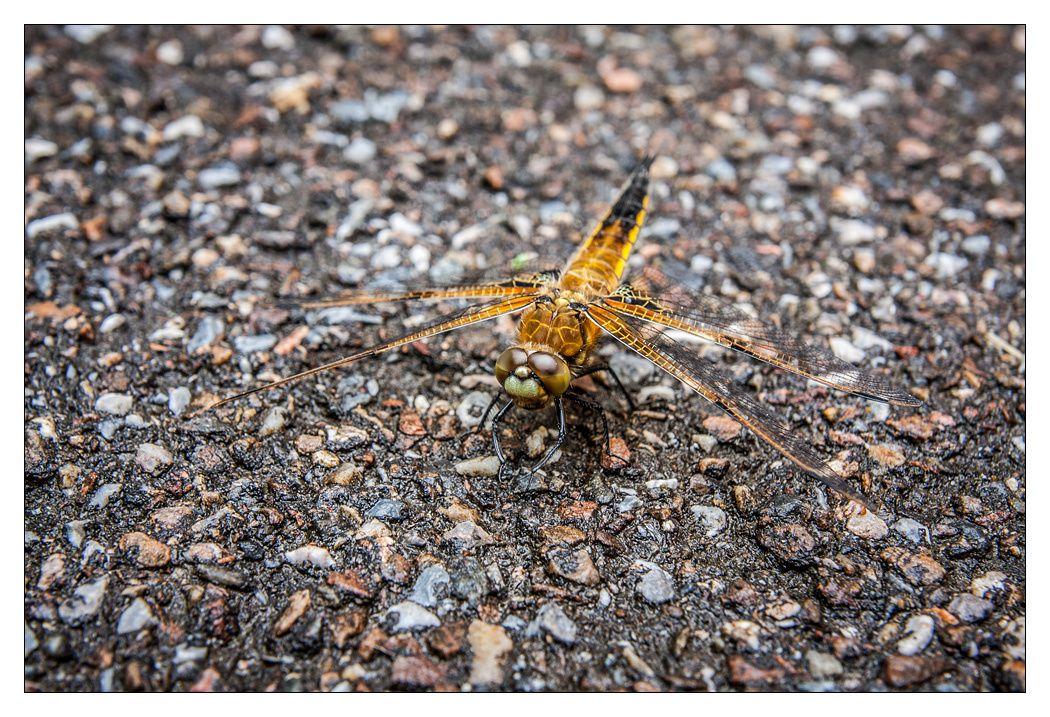 [Photos] I.N.I - Insecte Non Identifié.