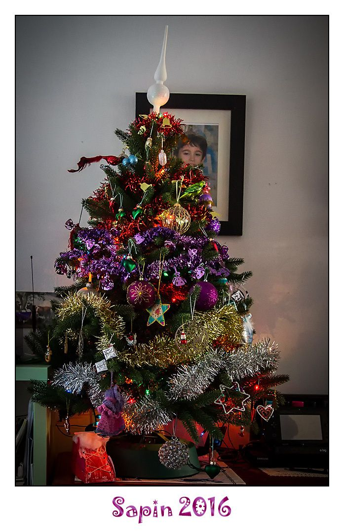 [Photos] Sapin 2016