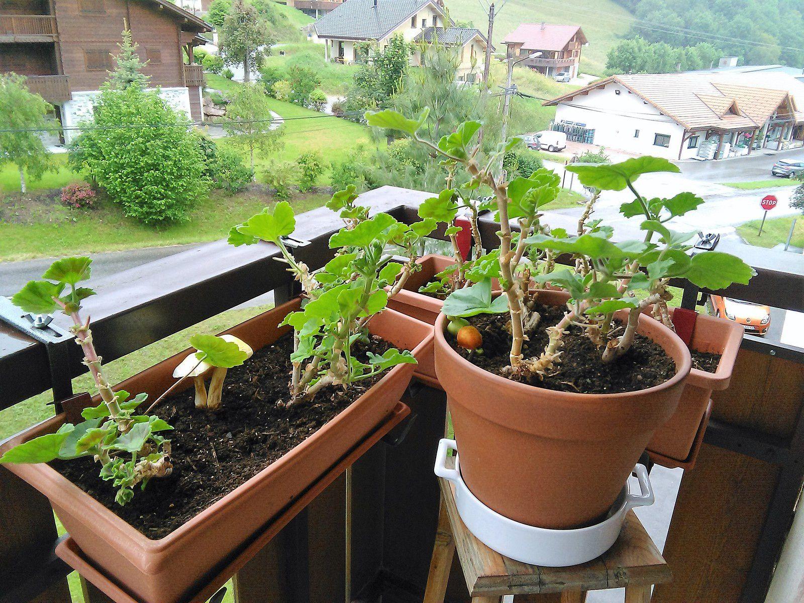 Une bonne floraison pour les plantes : c'est pas gagné !