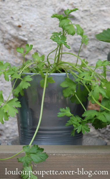 Mes petits travaux d'été : le pot chromé...