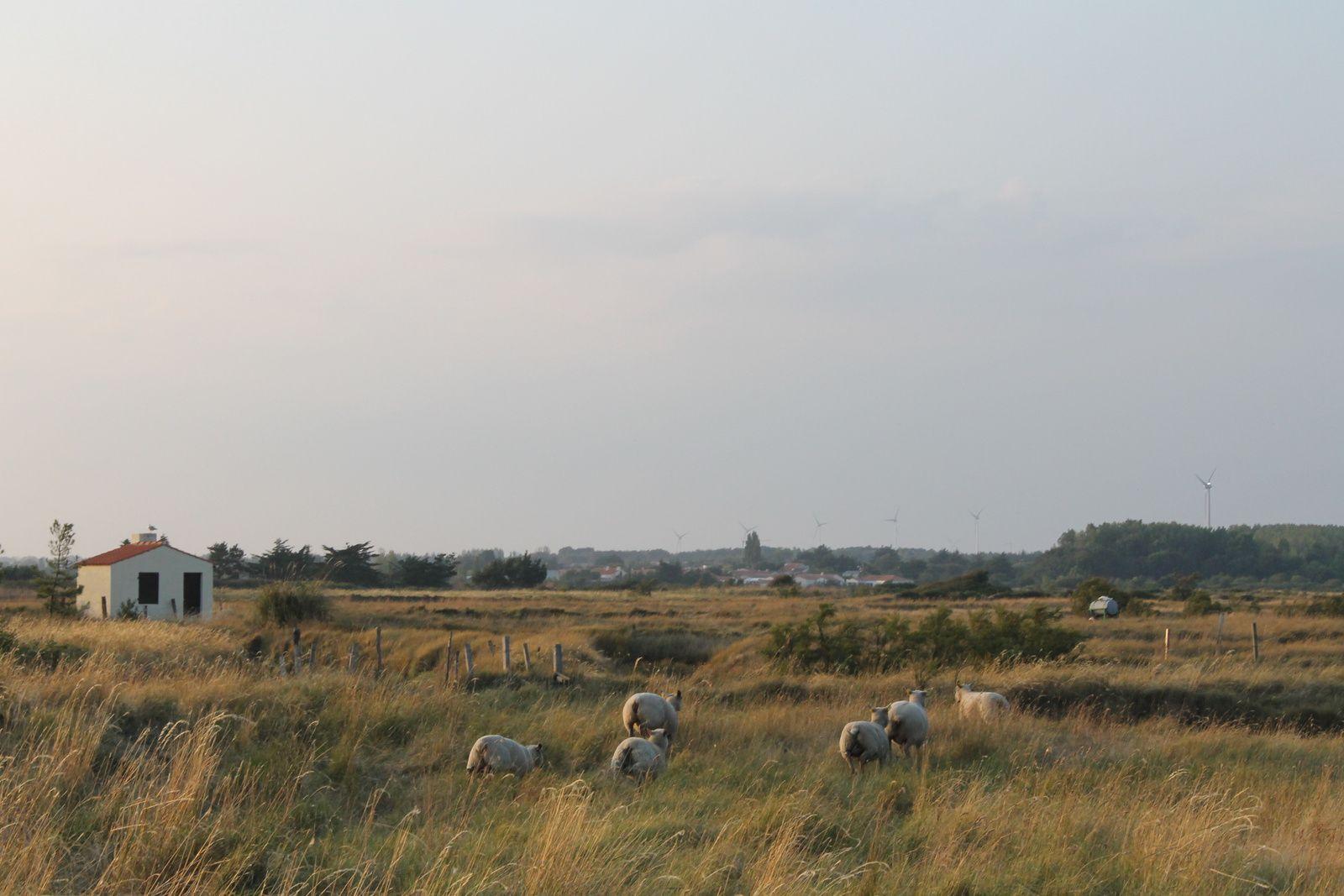 L'Ile d'Olonne (85, en Vendée)
