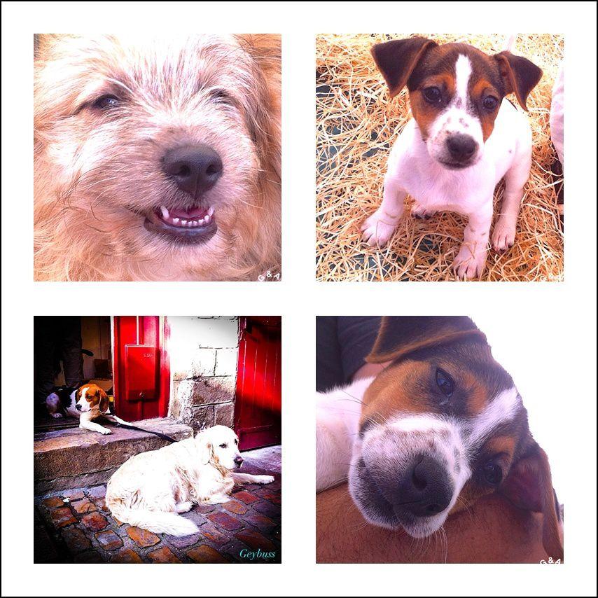 """Des chiens de races sur un salon """"animal"""" puis deux autres croisés dans une rue de Lille !"""