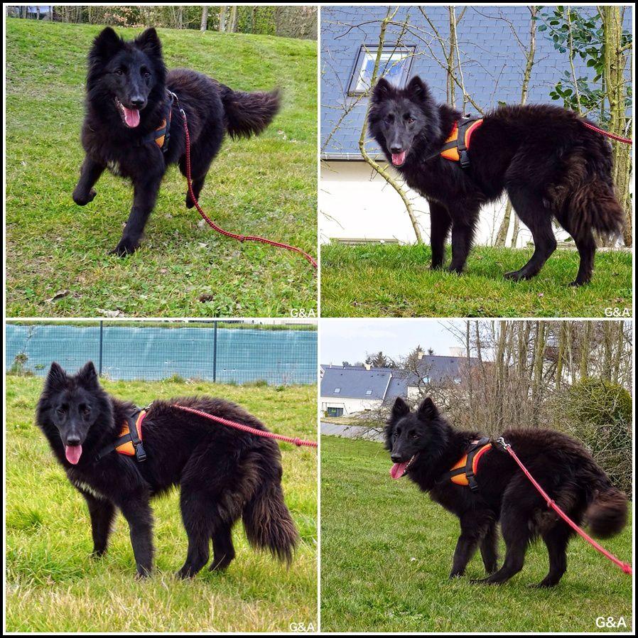 Ficka, superbe chienne de la SPA, adoptée au bout de 3 mois.