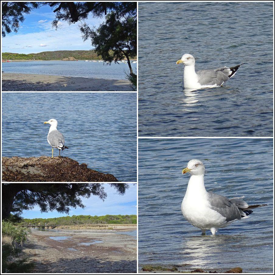 A Es Grau. Sur la photo en bas à gauche, ça ne se voit pas, mais je suis entrain de boire un grand café bien mérité après ce réveil ultra matinal pour aller voir les oiseaux de la réserve.