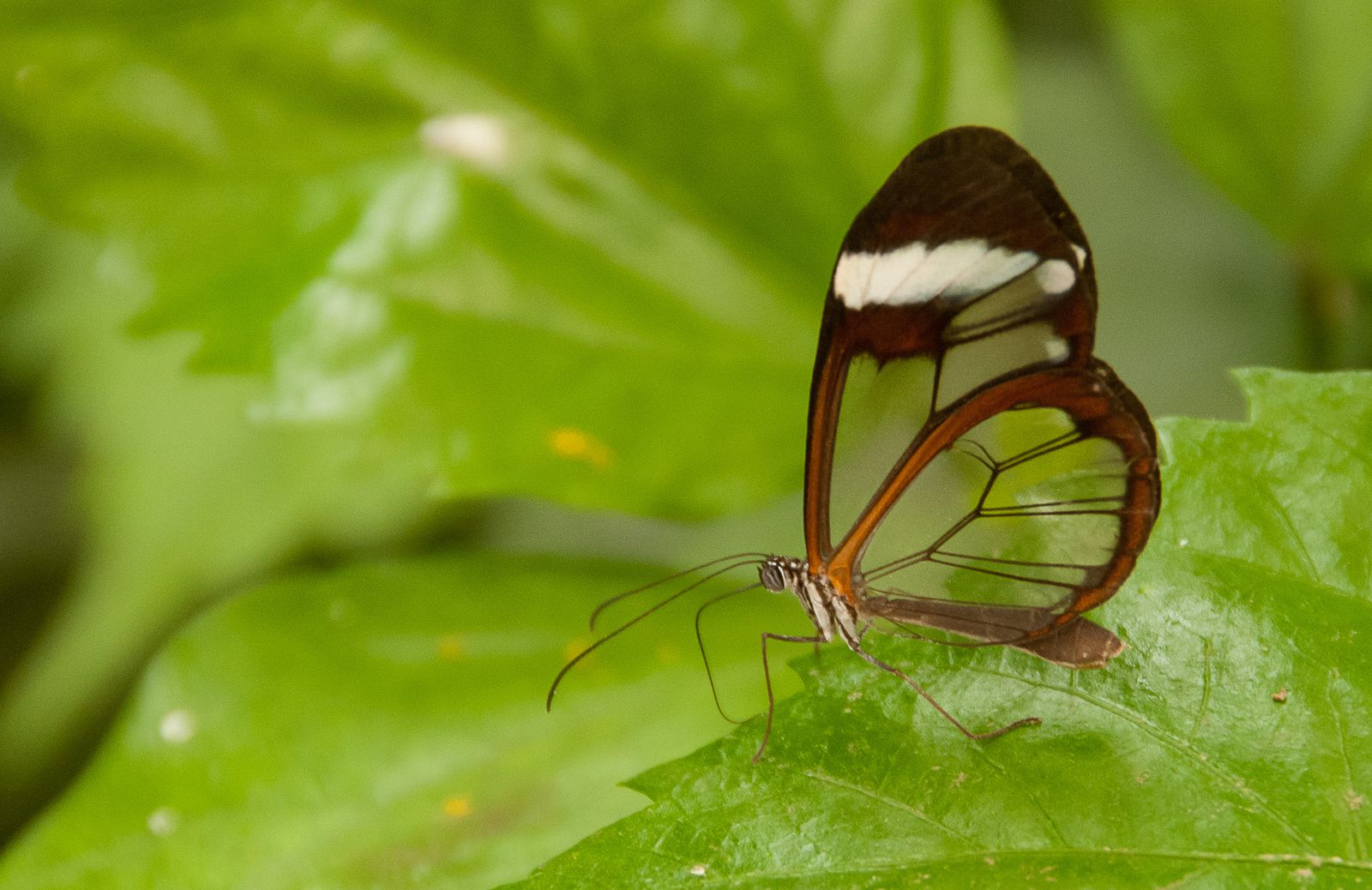 Papillons Juillet 2014
