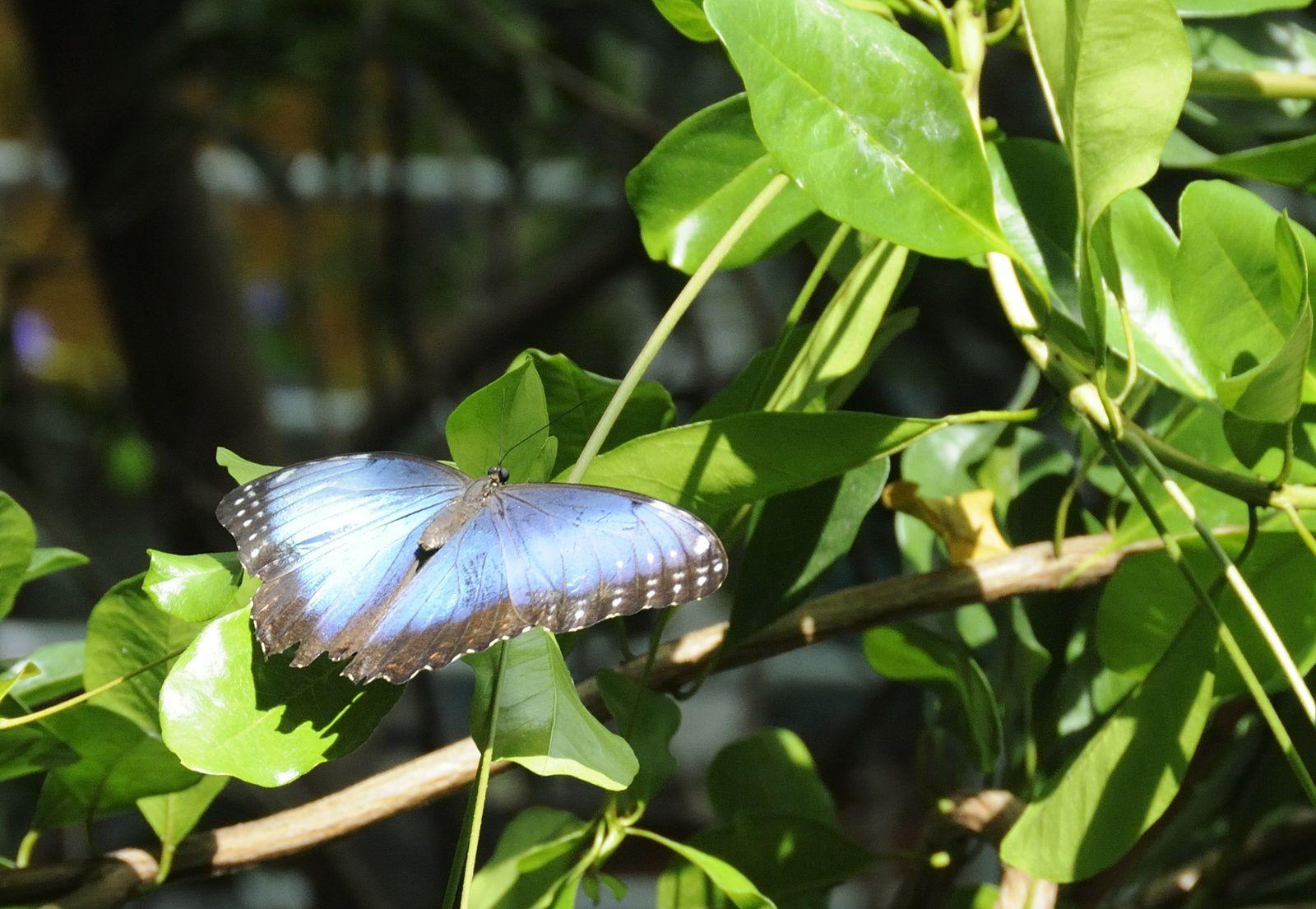 Papillons, SFO 2012