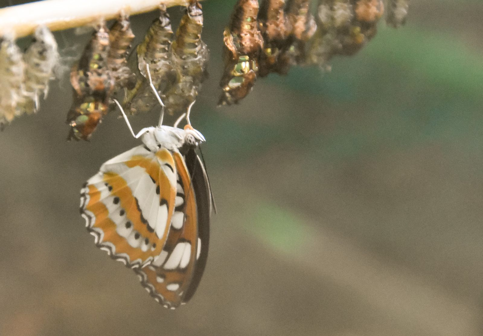 Papillons 2015