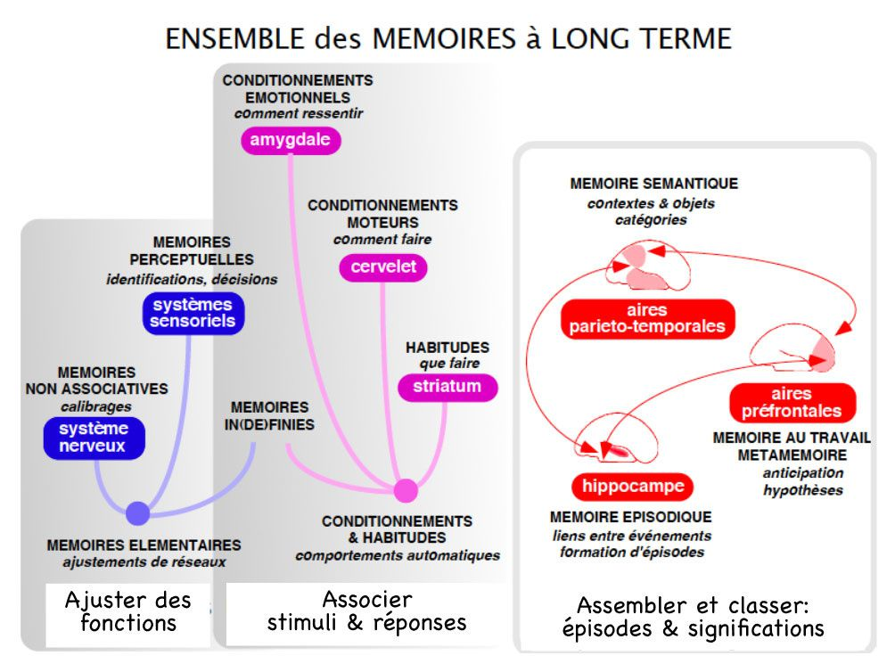 Ensemble des mémoires à long terme - à disposition permanente
