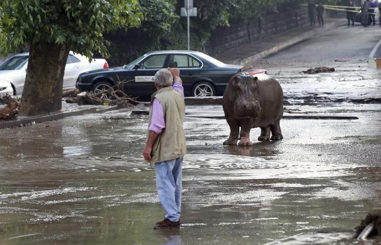 Les animaux sous la pluie ?