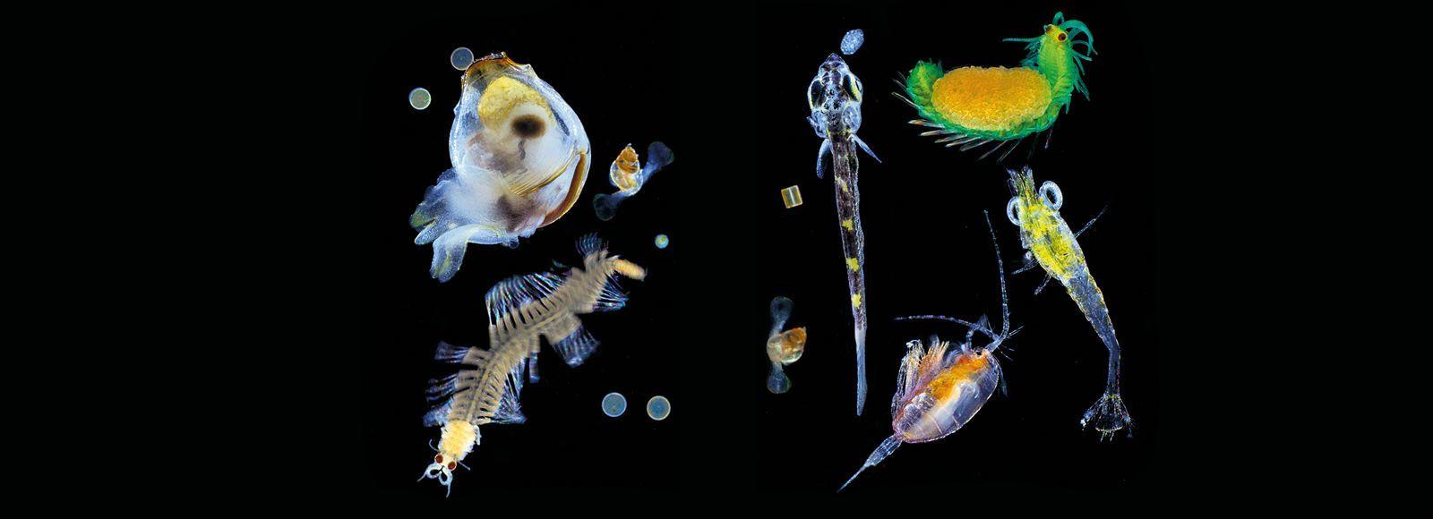 PLANCTONS du plancton ?