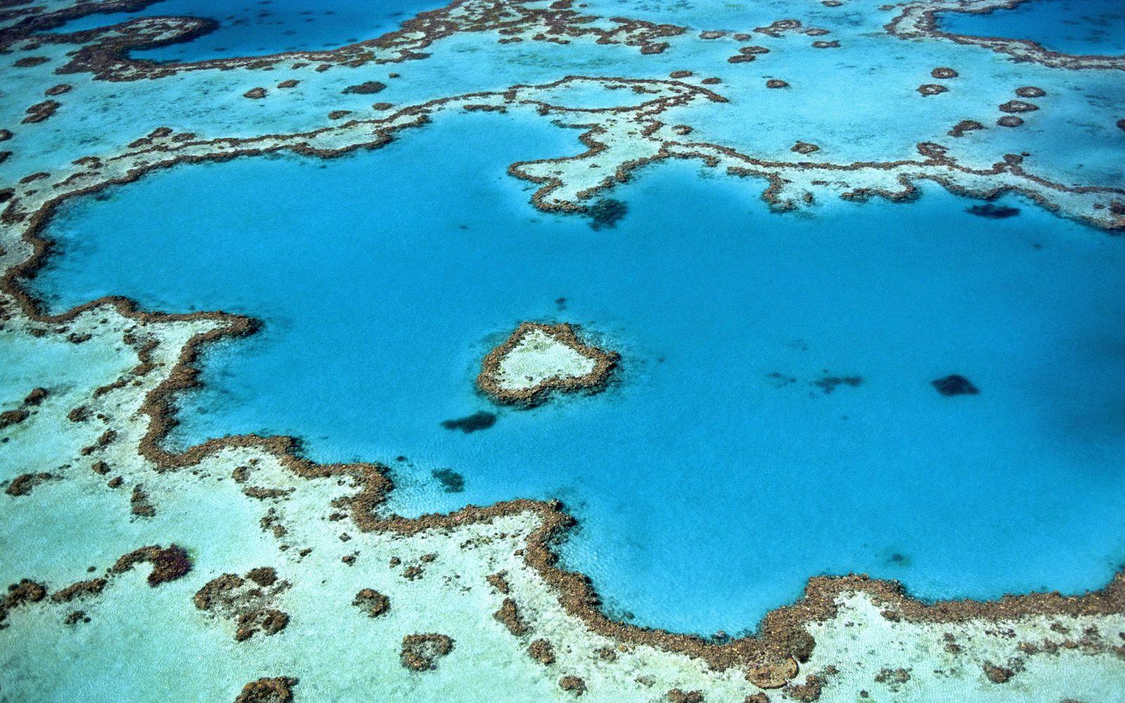 Le corail abandonné ?