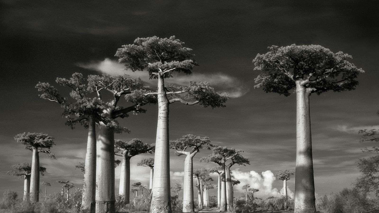 Un arbre a besoin de ses semblables pour s'épanouir