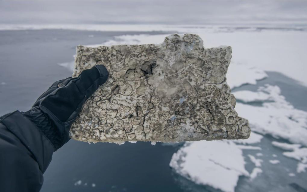 Une menace de taille qui pourrait être « potentiellement très dangereuse » pour la faune qui peuple l'Arctique.
