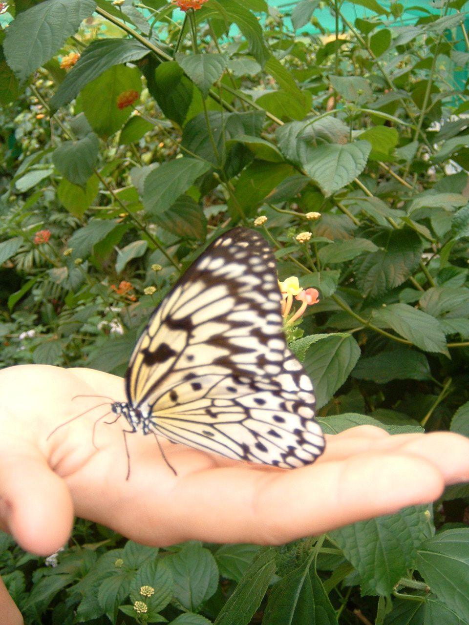 La serre à papillon du château de Haute Goulaine