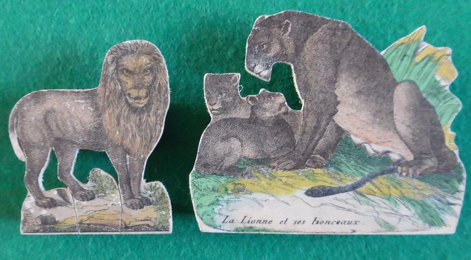 lion,lionne et lionceaux
