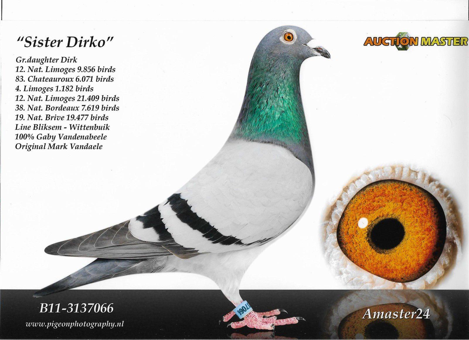 Nos pigeons et leurs descendants cartonnent dans d'autres colombiers (New)!