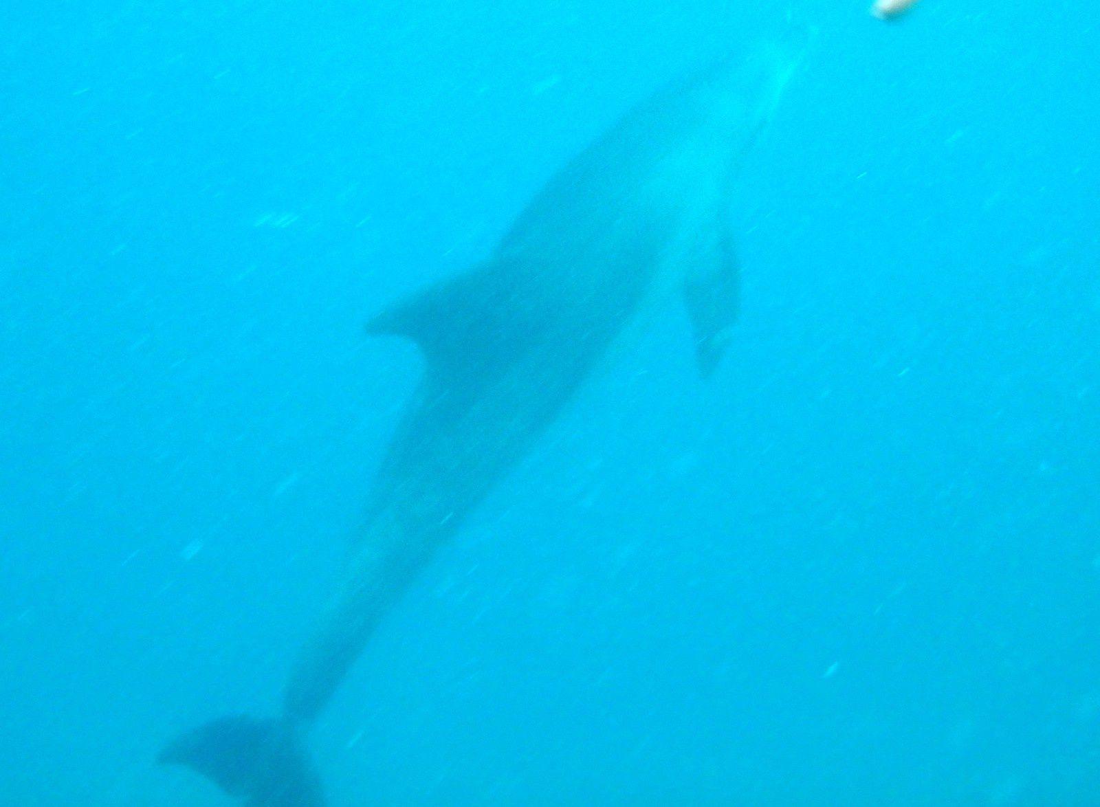 Et... j'ai nagé avec des dauphins