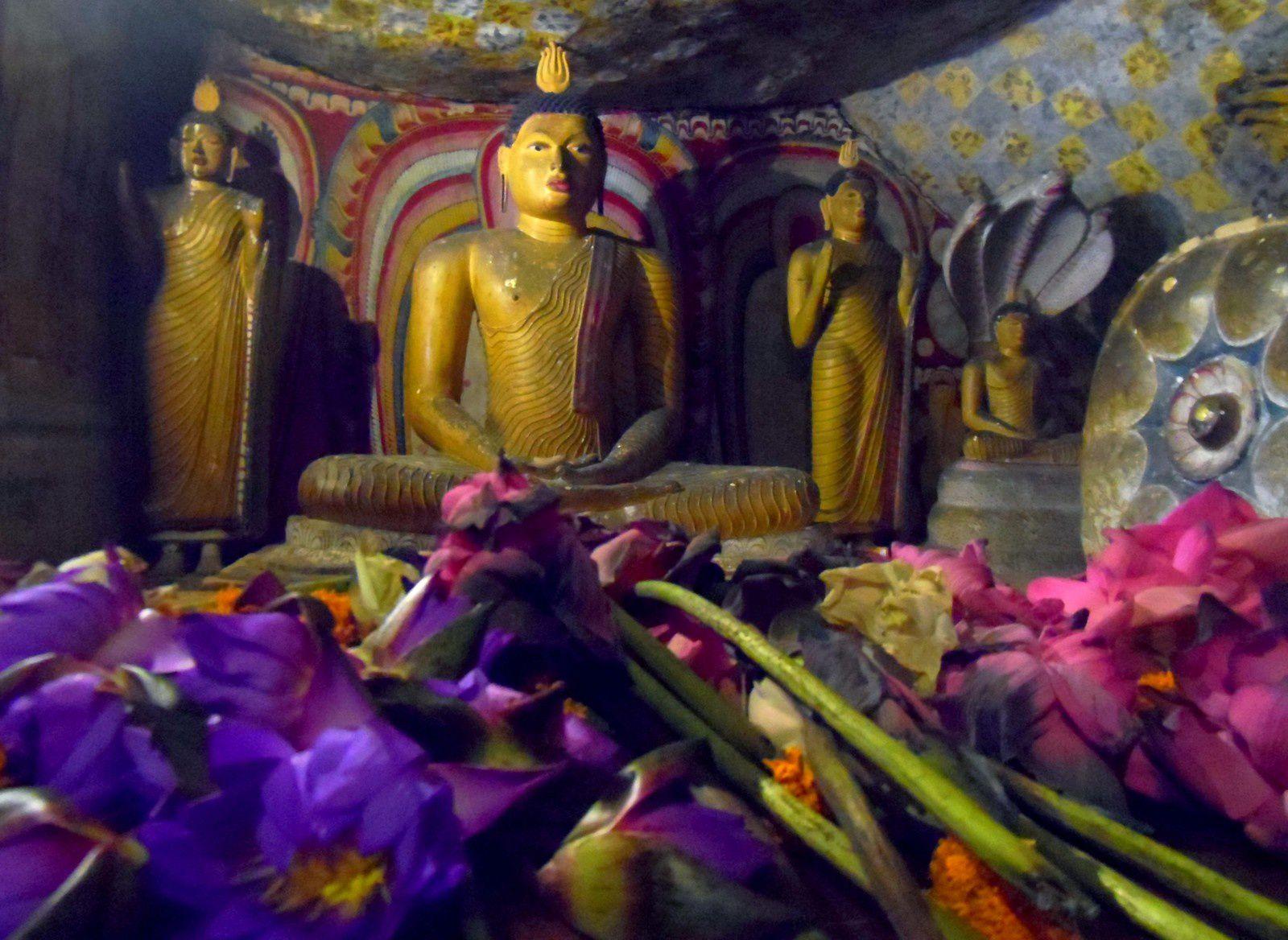 Dambulla : singes, grottes et bouddhas