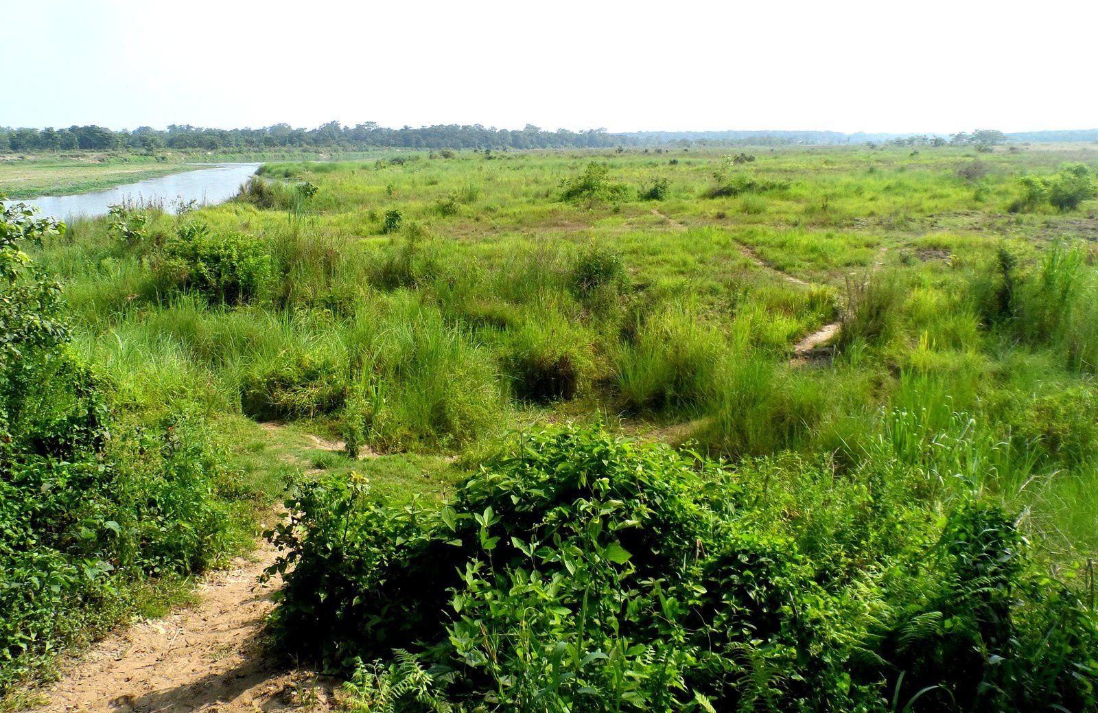 Chitwan, oiseaux, crocos et rhino