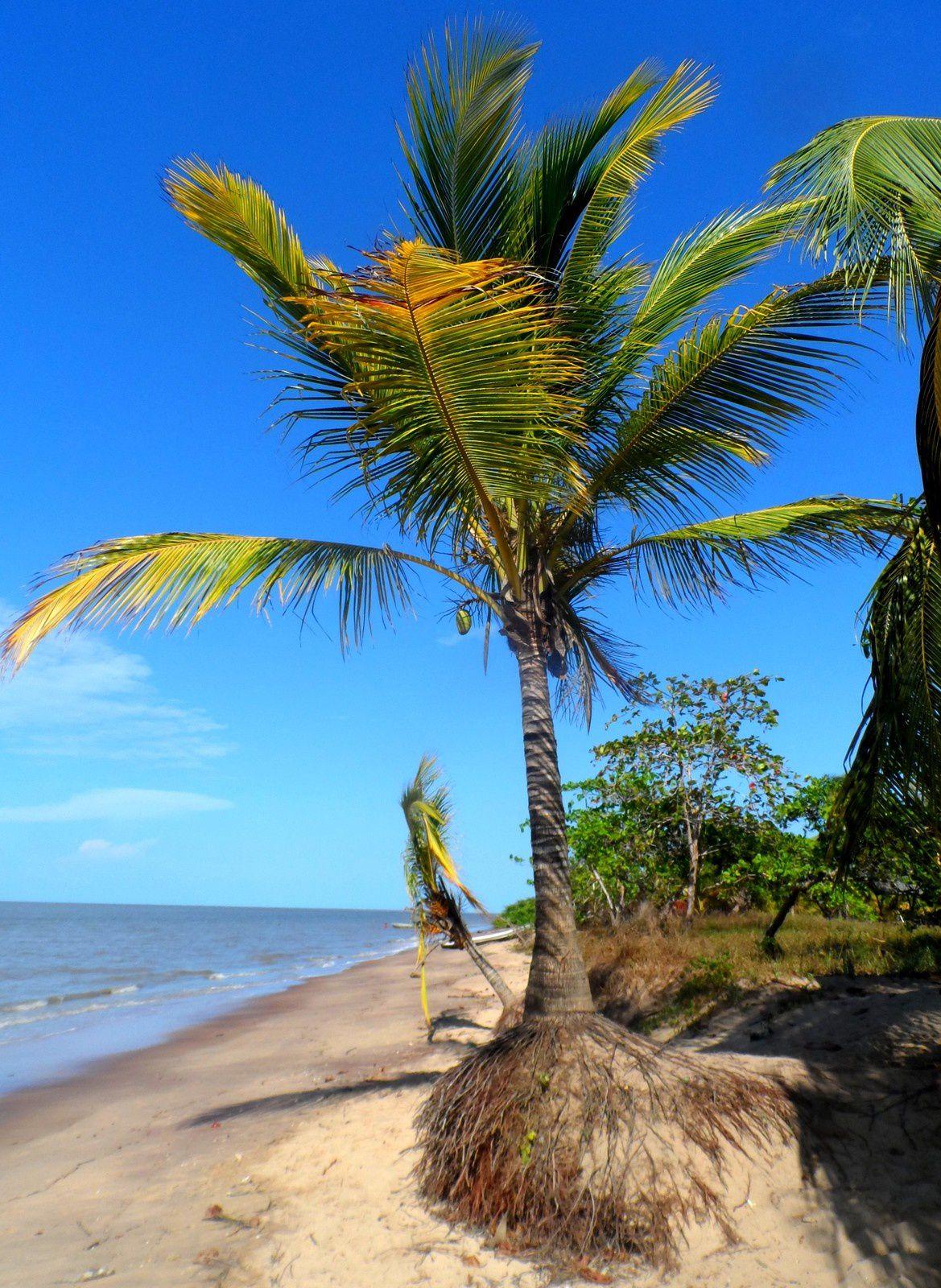 La Guyane, ça me gagne