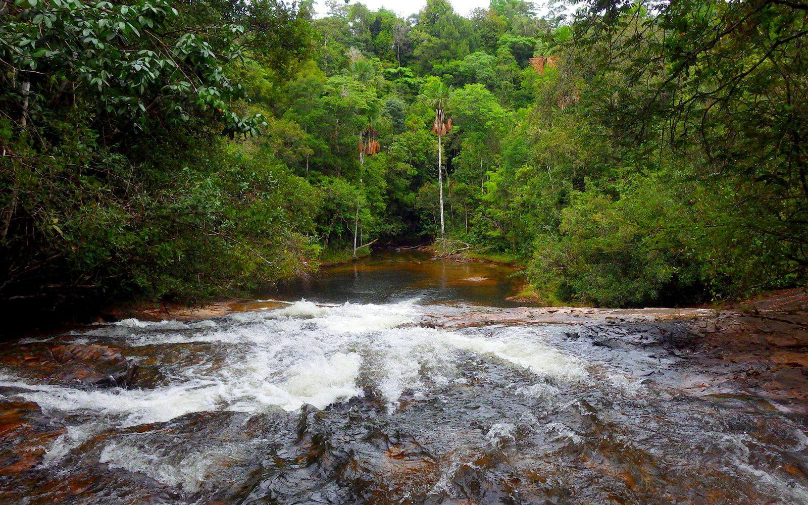 A travers la forêt amazonienne: les chutes Voltaire