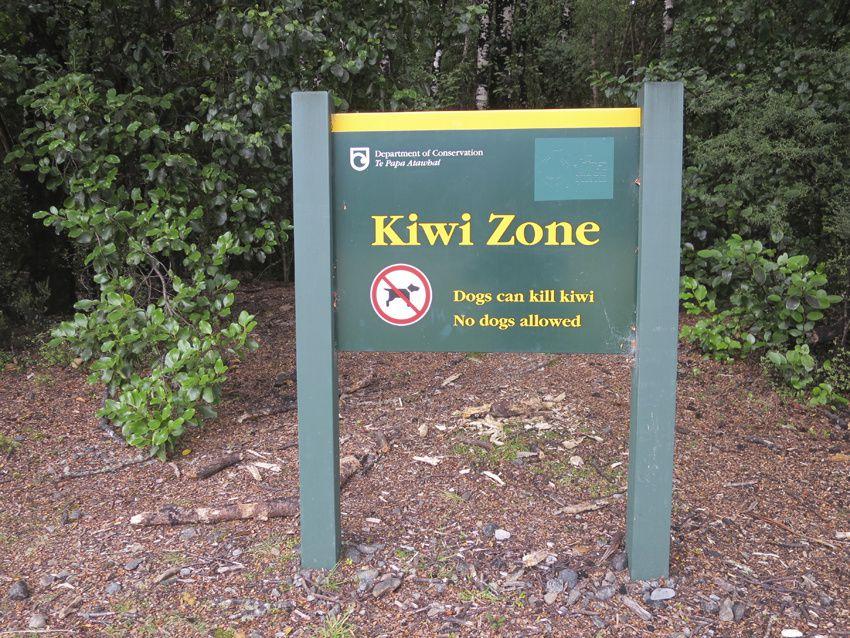 Dans cette zone de kiwis, les chiens sont interdits. Ph. Delahaye.