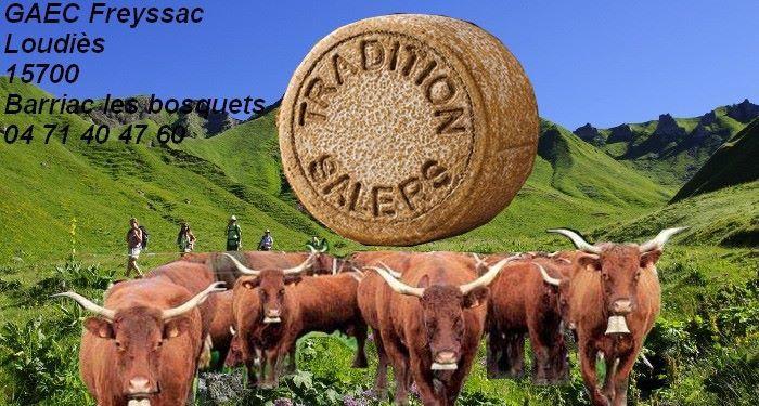 Le GAEC Freyssac à Loudiès, sur la voie lactée du Salers Tradition