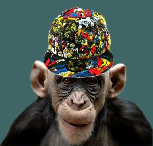 Histoire de singes