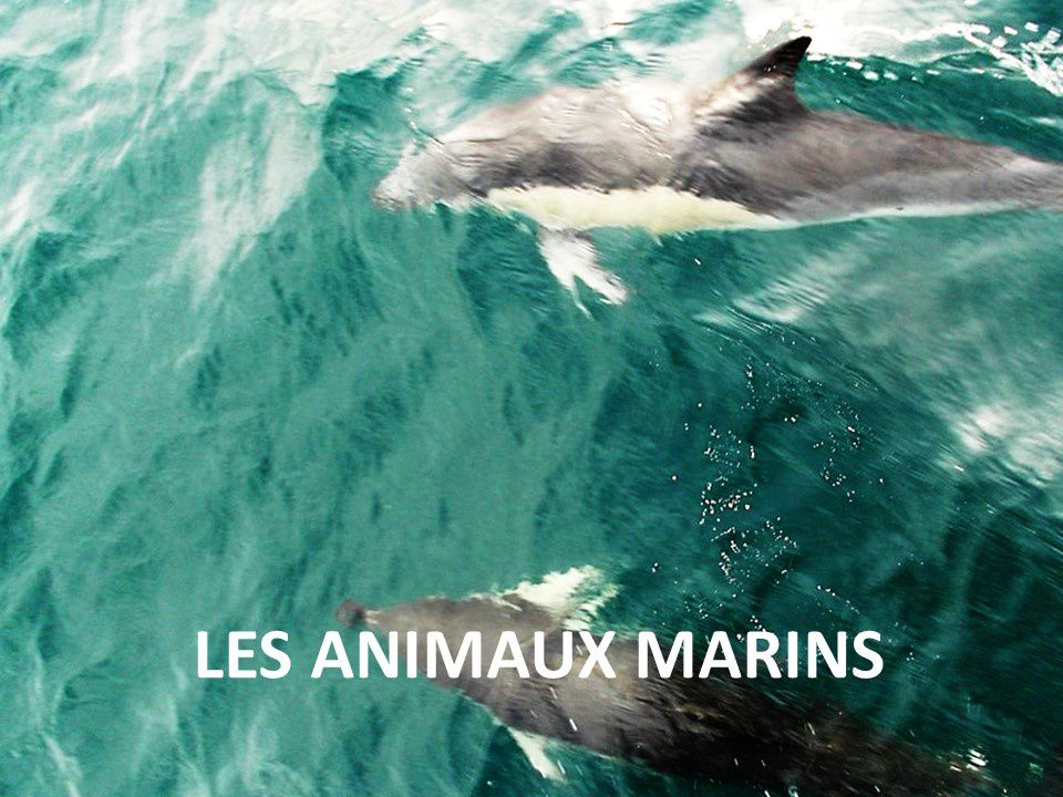 Souvent LES ANIMAUX MARINS - CLUB HENDAYE VOILE Contact : 06 80 84 56 66  SL32