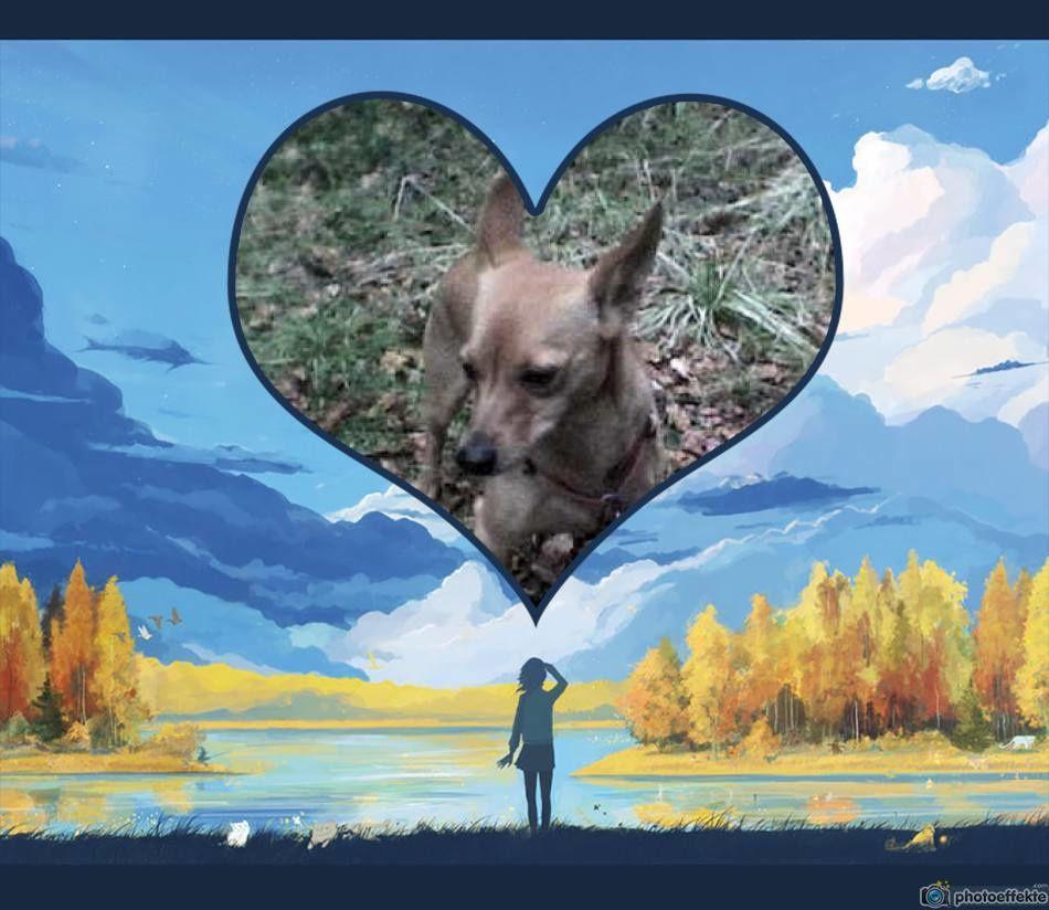 Guten Morgen Und Einen Schönen Herbst Mein Blog Mein