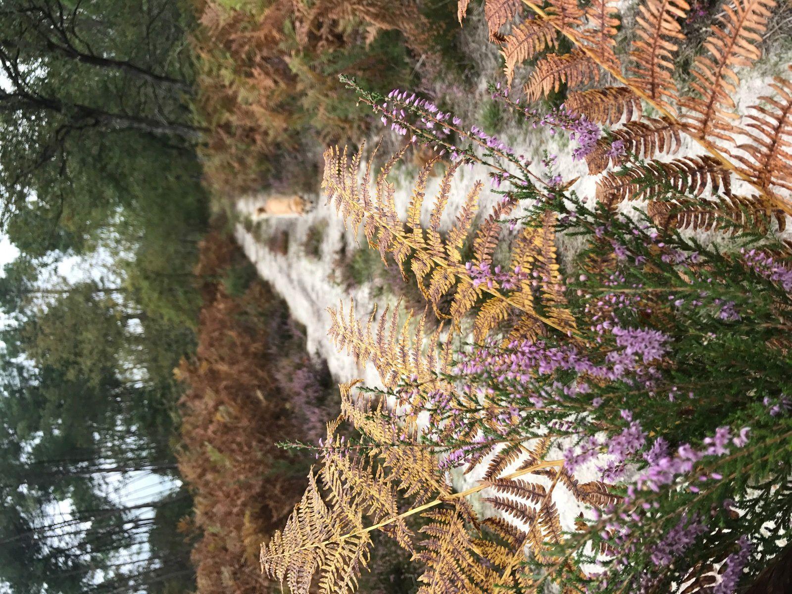 Vive l'automne et les balades en forêt