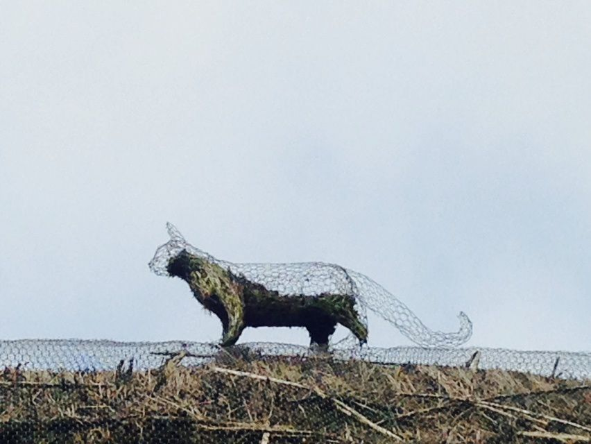 Cat on a hot thached roof