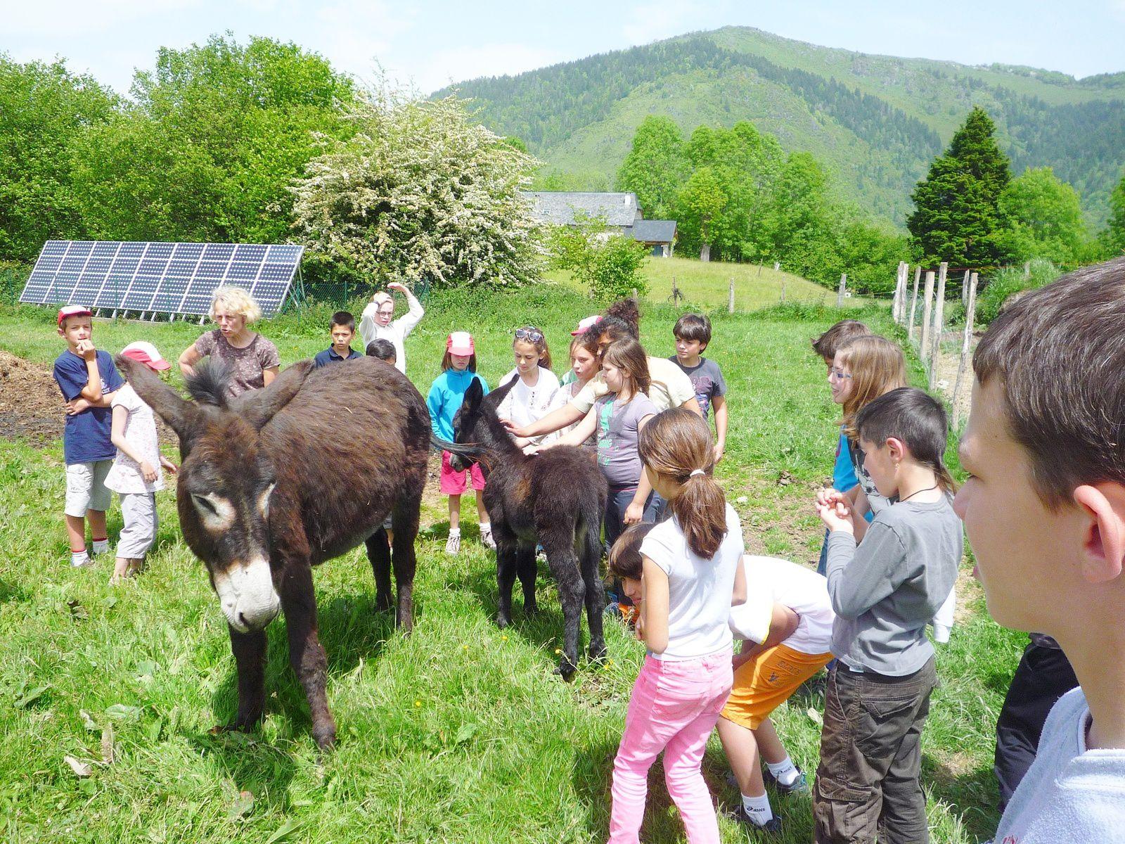 On va voir la petite famille âne qui a un grand rôle pour ... (incroyable !) protéger le troupeau de l'ours ! Et nous, on craque pour l'ânon !