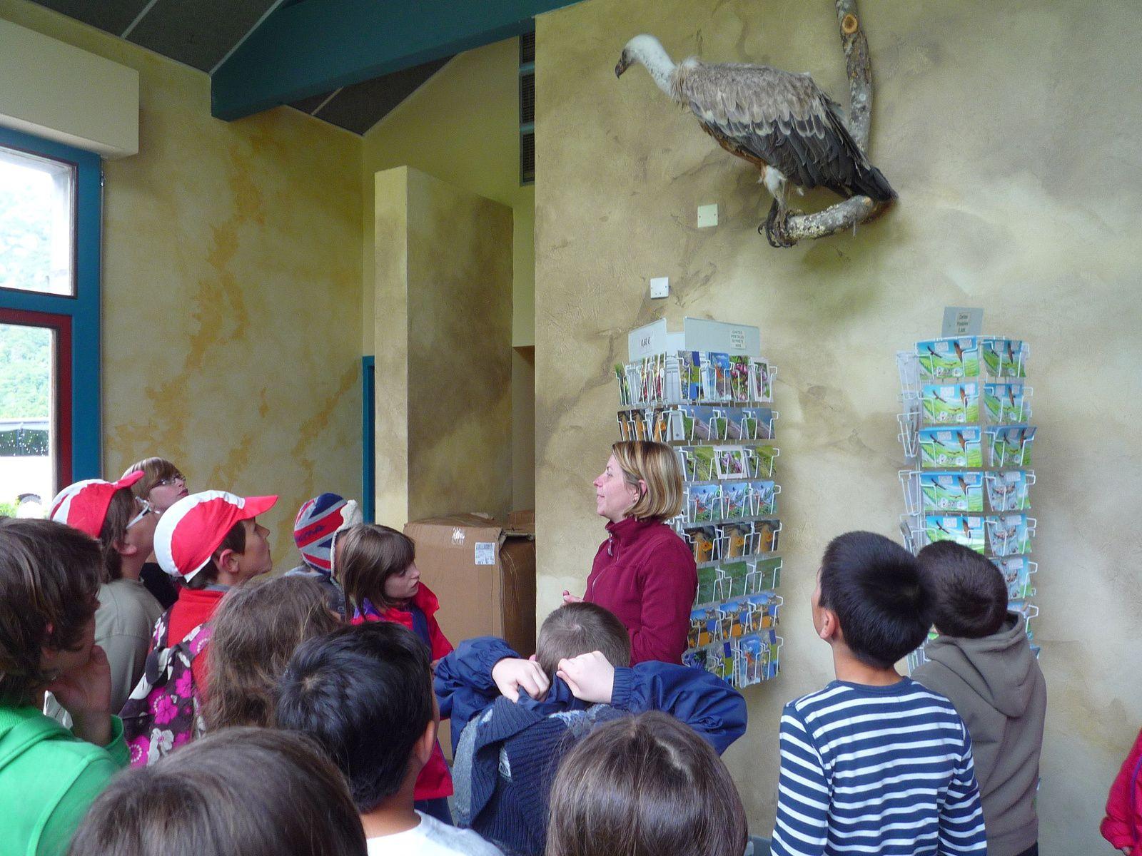 Mercredi après-midi, nous sommes à la falaise aux vautours pour évoluer dans un musée interactif passionnant où nous découvrons cet animal si important pour l'équilibre de la nature et pour la biodiversité, juste au-dessus de nos têtes. Grâce à des caméras installées au pied de leurs nid, nous suivons en direct, depuis le musée leurs déplacement et les suivons avec des jumelles en plus des nombreux jeux interactifs nous faisant mieux connaître les différents rapaces que nous observons tout au long de nos randos.