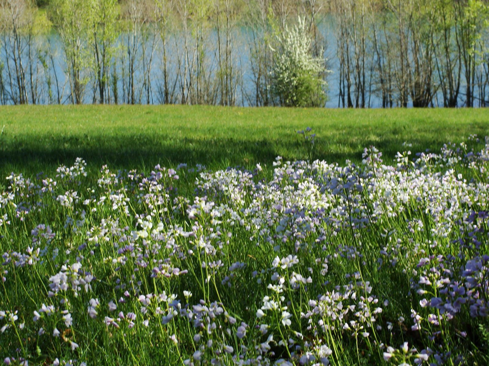 lac de Montbel : couleur printemps