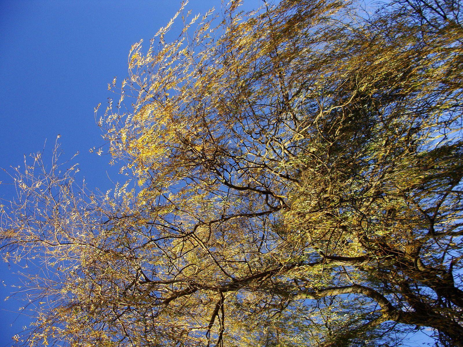 Lac de Chalabre: couleurs des arbres