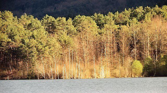 Lac de Montbel : couleurs