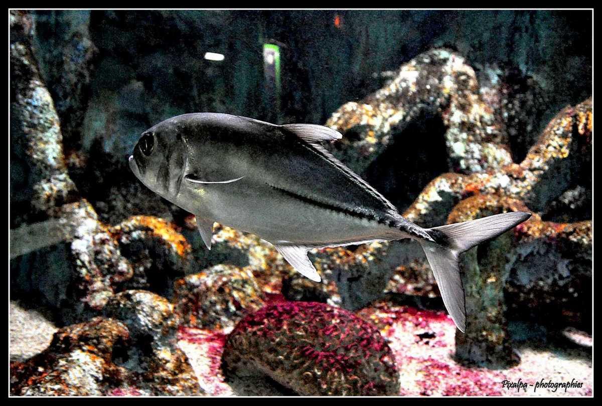 aquarium de noirmoutier pixalpa photographies