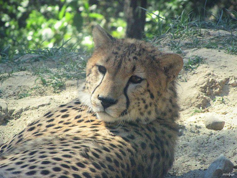 Photo prise à Lunarel zoo de Montpellier