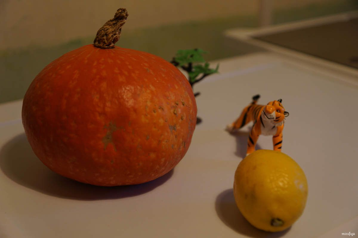 PROJET PHOTOGRAPHIQUE TOY DAY#25